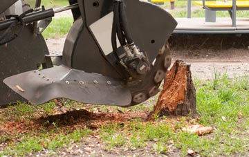 professional Houston stump grinding services