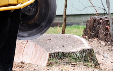 tree stump grinding Houston, Renfrewshire