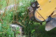 free Houston tree stump grinding quotes